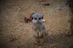 ps-pictureshop: Afrikas Tierwelt