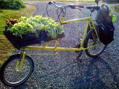 Talk about fresh! Whidbey Island Washington, Vegetable Delivery, Lettuce, Vegetables, Garden, Plants, Bike, Sea, Fresh