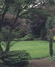 Define an open yard.Create landscape perimeter with trees and shrubs, evergreens...