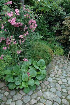 shaped boxwood, rose