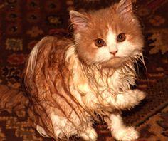 Henry war unter der Dusche