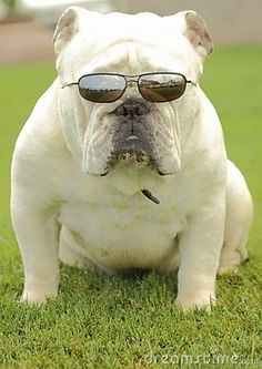my favorite...bulldogs!