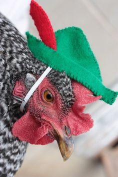 Ba-Gawks: chickens in tiny hats
