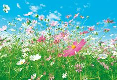 Free Printable Colorful Meadow Background   Large printable flower murals Lactation Consultant and Breastfeeding ...