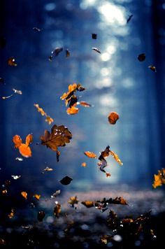 #119-Dancing Leaves