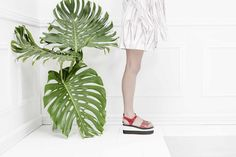 Eureka Shoes is a contemporary footwear and accessories label for men and women. Eureka Shoes, Ss 15, Plant Leaves, Spring Summer, Notes, Trends, Platform, Report Cards, Notebook
