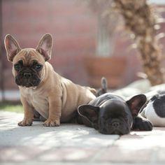 Puppy life...