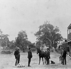 The Alma Hotel, Willunga South Australia, Historical Photos, Places To Visit, Photograph, Horses, Sun, History, Historical Pictures, Photography