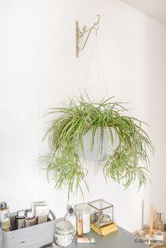 Herbs, Traditional, Contemporary, House Styles, Mini, Flowers, Plants, Nova, Lifestyle