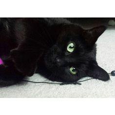 Mako Cat | Pawshake