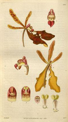 10 Botanical Illustration Pins you might like