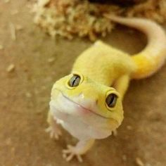I now that this is a lizard, bit I love it so much