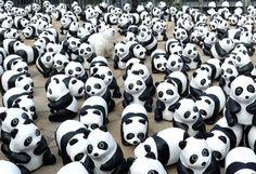 紙貓熊 大安森林公園快閃 | 生活 | 即時新聞 | 聯合新聞網
