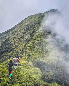 One of the most beautiful hikes in Sri Lanka  Knuckles Mountain Range  Photograper @eshanhg  #knuckles #Hike #Range #Mountain #travel #nature #treking #travelsrilanka #visitsrilanka #Hashtagsrilanka #cloud #fog #adventure #india #Nepal #Pakistan #Maldives #singapore #thailand #malaysia #holiday #instagood #instatravel #instanature