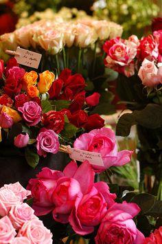 Roses ♥ ♥
