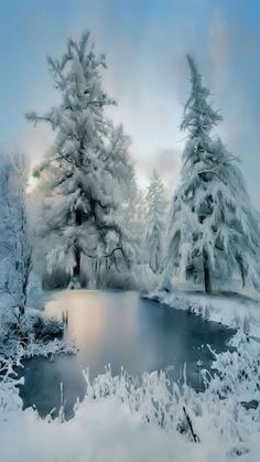 Fresh Snow Over Denny Mountain Wallpaper Winter Nature Wallpapers) – Wallpapers Winter Szenen, Winter Love, Winter Magic, Winter Christmas, Christmas Tree, Winter Photography, Nature Photography, Travel Photography, Foto Picture