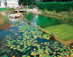 natural swimming ponds  we're building one!