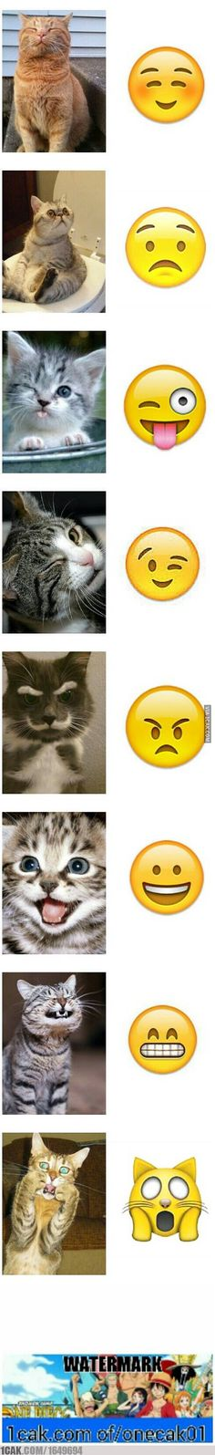 ekpresi kucing yang ada dalam emoji :v