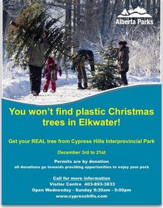 Make a note in your daily planner to stop by Elkwater Dec 3 -21st to harvest your Real Christmas Tree.