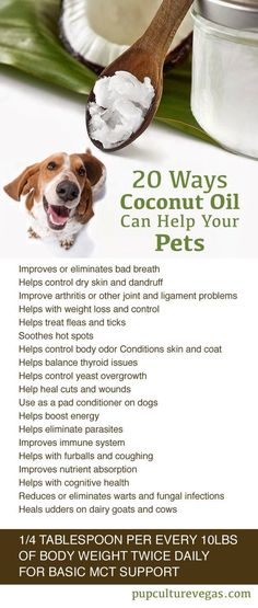 20 Ways Coconut Oil can Help your Pets