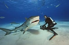 """""""Brian Skerry Shines a Light On Sharks"""" for National Geographics - photo by Brian Skerry 