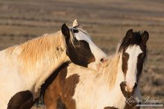 Horses And Dogs, Cute Horses, Wild Horses, Beautiful Horses, Animals Beautiful, Animals And Pets, Horse Photos, Horse Pictures, Animal Pictures