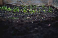 Garden Soil, Garden Care, Garden Beds, Vegetable Garden, Edible Garden, Organic Farming, Organic Gardening, Gardening Tips, Balcony Gardening