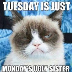 Cats are funny, grumpy cats are hilarious. The Internet is full of Grumpy cats funny memes. Even we came across such funny pictures while surfing the web. Grumpy Cat Quotes, Funny Grumpy Cat Memes, Hilarious Memes, Cat Jokes, Funny Minion, Funny Shit, Haha Funny, Funny Cute, Funny Stuff