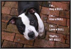 Hug-a Bull, Kiss-a Bull, Love-a Bull