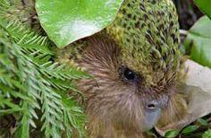 Meet Sirocco, the spokesbird