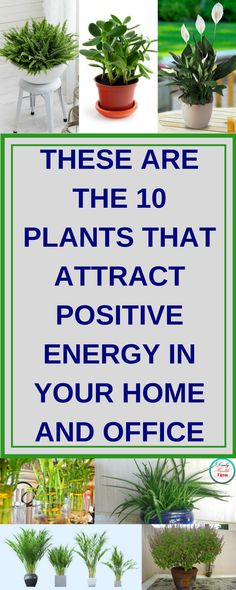 These Are The 10 Plants that Attract Positive Energy in Your Home and Office Outdoor Plants, Air Plants, Garden Plants, Outdoor Gardens, Inside Garden, Inside Plants, Indoor Garden, Lawn And Garden, Low Light Plants