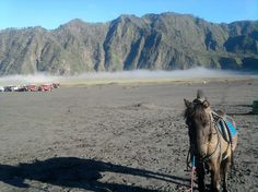 Horse at Mount Bromo's Sea of Sands.