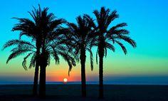 Adoro las palmeras.