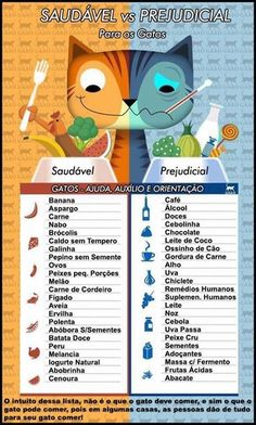 Healthy & Harmful Foods for Cats Love Pet, I Love Cats, Crazy Cats, Cute Cats, Funny Cats, Somali, Animals And Pets, Cute Animals, Cat Sitter