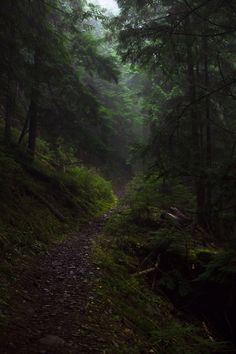 Image about nature in Deep Woods by David Stupke Dark Green Aesthetic, Nature Aesthetic, Slytherin Aesthetic, Dark Forest, Nature Pictures, Aesthetic Pictures, Nature Photography, Beautiful Places, Scenery