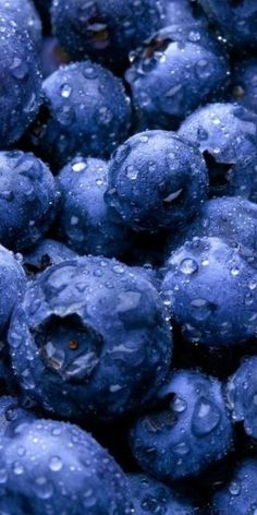Dark berries, like these amazing-looking are packed with antioxidants & other nutrients. My favorite fruit. It's crazy how so many nature made objects have their own natural, perfect patterns. Photo Fruit, Fruit Picture, In Natura, Blue Aesthetic, Canning Recipes, Cranberries, Fruits And Vegetables, Fresh Fruit, Dried Fruit
