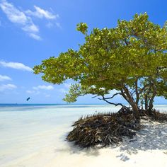 Beautiful beach in the Florida Keys, USA