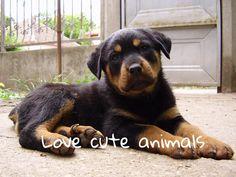 Love cute animals!! #love #cute #animals