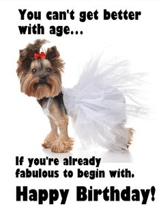 Send Free Already Fabulous - Funny Birthday Card to Loved Ones on Birthday & Greeting Cards by Davia. It's free, and you also can use your own customized birthday calendar and birthday reminders. Girl Birthday Cards, Birthday Greeting Cards, Birthday Greetings, Birthday Wishes, Birthday Memes, Funny Pictures Tumblr, Funny Pictures With Captions, Absolutely Fabulous Birthday, Happy Birthday Quotes For Friends