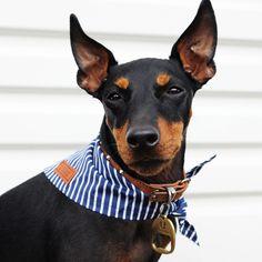 The Captain Dog Bandana by Pethaus