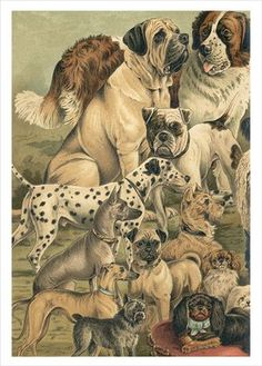 The Dybdahl Co Dogs, poster 50x70