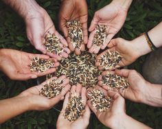 10 Ways Permaculture Principles Can Help Your Relationships Permaculture Principles, Hand Henna, Hand Tattoos, Relationships, Canning, Relationship, Dating, Home Canning, Conservation