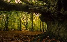 The Fairy King's advice on Trees. A poem from Early Ireland | Irish Archaeology