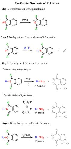 The Gabriel Synthesis of Primary Amines - summary of methods for hydrolysis of the imide Science Chemistry, Organic Chemistry, Organic Synthesis, Physics Formulas, Future Jobs, Med School, Natural Health Remedies, School Hacks, Science And Nature