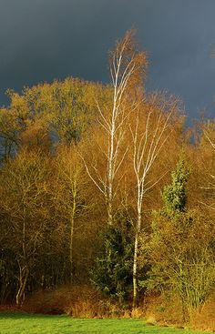 Winter in Harfsen 2012 #3