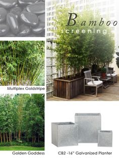 BAMBOO SCREEN for privacy . Monrovia says to plant bamboo in containers as they are creepers and will take over.