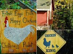 organic_farm_fresh_eggs06