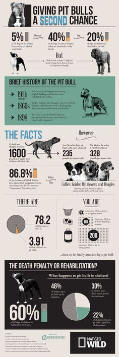 Giving pit bulls a second chance [infographic] - Holy Kaw!