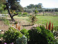 Aloes et Acacia