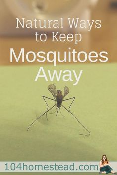 I've been experimenting with natural ways to keep mosquitoes away for a few years, and I've found a few things that work for me.